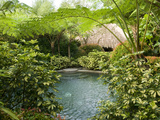 Pool in a Tropical Garden  Laguna  Philippines  Southeast Asia  Asia