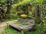 Moon Garden Features Series of Trellises with Thunbergias  by P Geertz  Tagaytay  Philippines