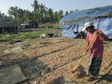 Drying Prawns in Fishing Village of Lay Win Kwin Village  Irrawaddy Delta  Myanmar (Burma)  Asia