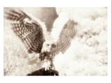 Owl Ascending