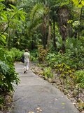 Harry P Leu Gardens  Orlando  Florida  United States of America  North America