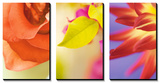 Exotic Floral Triptych