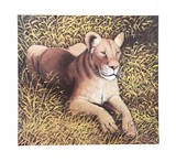 Ngorongoro Lioness