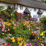 Flower Fronted Thatched Cottage  Devon  England  United Kingdom  Europe