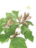 Balsa Tree