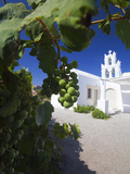 Grapes and Church  Santorini  Cyclades  Greek Islands  Greece  Europe