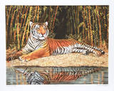 Reclining Tiger