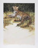 Reclining Leopard