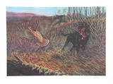 Hunting Dog