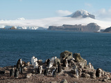 Aitcho Island  Antarctica  Polar Regions