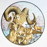 Big Horns