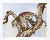 Leopard Silohuette