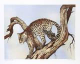 Leopard Silohuette