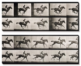 Jockey on a Galloping Horse  Plate 627 from &quot;Animal Locomotion &quot; 1887