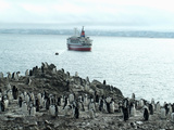 Chinstrap Penguins on Shore with Cruise Ship and Zodiac in Background  Hannah Point  Anarctica