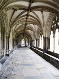 Norwich Cathedral Cloisters  Norwich  Norfolk  England  United Kingdom  Europe