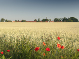 Common Poppy (Papaver Rhoeas) at Wheat Field and Ctenice Castle  Ctenice  Czech Republic