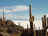 Cacti with Salt Desert in Background  Salar Uyuni  Southwestern Bolivia
