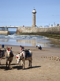 Donkeys on Whitby Sands  Whitby  North Yorkshire  Yorkshire  England  United Kingdom  Europe
