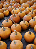 Large Number of Pumpkins for Sale on a Farm in St Joseph  Missouri  USA  North America