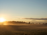 Sunrise on Field of Green Grass with Douglas Firs and Mount Rainier  Vashon Island  Washington  USA