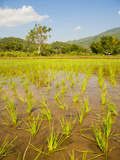 Rice Paddy Field Landscape in the Mountains Surrounding Chiang Rai  Thailand  Southeast Asia  Asia