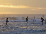 Stilt Fishermen at Weligama  South Coast  Sri Lanka  Asia