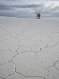 Cracked Sand Dune with a Yucca  White Sands National Monument  New Mexico  USA  North America