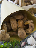 Ceps Mushrooms (Boletus Edulis) in a Bag and in a Wooden Box  Italy  Europe