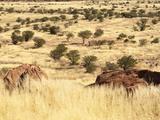 Terrain Surrounding Twyfelfontein Rock Art Site  Damaraland  Southern Kaokoveld Wilderness  Namibia
