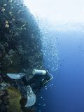 Diver Swimming Along a Wall at Bunaken  Sulawesi  Indonesia  Southeast Asia  Asia