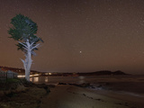Monterey Bay with Tree and Night Sky with Stars  Monterey  California  USA  North America