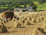 Oat Stooks  Knockshee  Mourne Mountains  County Down  Ulster  Northern Ireland  UK  Europe