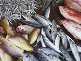 Fish at Market  Weligama  Southern Province  Sri Lanka  Asia