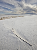 Yucca Flower Stalk on the Dunes  White Sands National Monument  New Mexico  USA  North America
