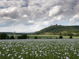 Zebrak and Tocnik Castles from across a Poppy Field  Tocnik  Stredocesko  Czech Republic  Europe