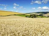 Summer Fields  Thorverton  Devon  England  United Kingdom  Europe