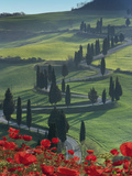 Winding Road and Poppies  Montichiello  Tuscany  Italy  Europe