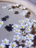 Flower Petals in Hotel Lobby  Goa  India  Asia