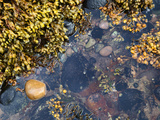 Rock Pool at Catterline  Aberdeenshire  Scotland  United Kingdom  Europe