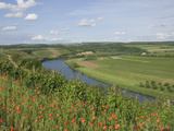 Poppies and Vineyards Along Border of Luxembourg and Germany  River Moselle (Mosel)  Germany