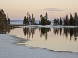 Evergreens Along Yellowstone Lake  Yellowstone Nat'l Park  UNESCO World Heritage Site  Wyoming  USA