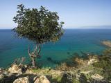 View Along Chrysochou Bay on North West Coast  Near Latsi  Cyprus  Mediterranean  Europe