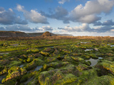 Seaweed Covered Rocks at Sunrise on Widemouth Bay  Cornwall  England  United Kingdom  Europe