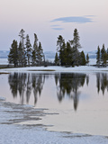 Evergreens Along Yellowstone Lake  Yellowstone Nat'l Park  UNESCO World Heritage Site  Wyoming  USA
