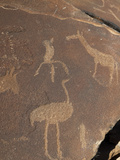 Rock Engravings  Huab River Valley  Torra Conservancy  Damaraland  Namibia  Africa