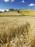 Summer Fields  Thorverton  Devon  England  United Kingdom  Europe