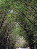 Bamboo Avenue  St Elizabeth  Jamaica  West Indies  Caribbean  Central America