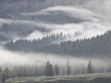 Fog Mingling with Evergreen Trees  Yellowstone Nat'l Park  UNESCO World Heritage Site  Wyoming  USA
