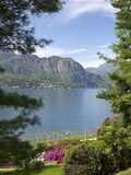Gardens of Villa Melzi  Bellagio  Lake Como  Lombardy  Italian Lakes  Italy  Europe